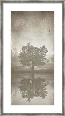 A Tree In The Fog 3 Framed Print by Scott Norris