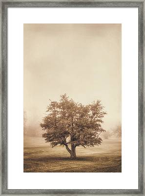 A Tree In The Fog Framed Print by Scott Norris