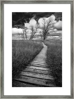 A Tree's Road Framed Print by Josh Eral