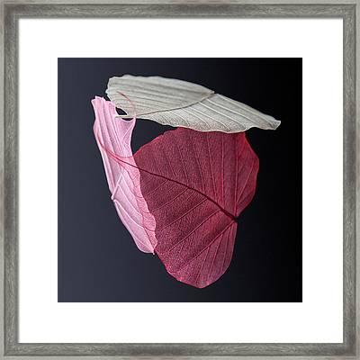 A Trinity Of Leaves Framed Print by Maggie Terlecki