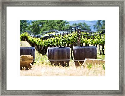 A Vineyard With Oak Barrels Framed Print by Susan  Schmitz