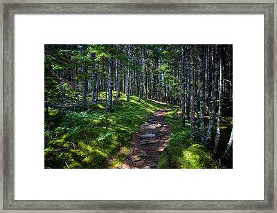 A Walk In The Woods Framed Print by John Haldane