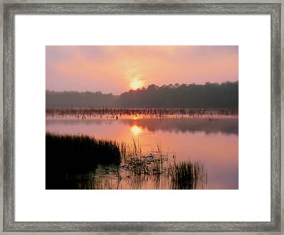 A Wetlands Sunrise Framed Print by JC Findley