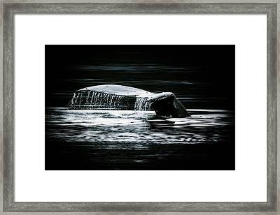 A Whale Of A Tail Framed Print by Janet Fikar