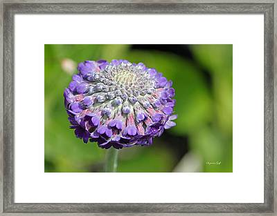 A Whatsis Framed Print by Suzanne Gaff