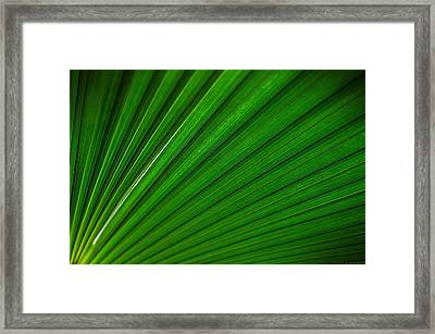A Wing Of Palms Framed Print by Philippe Meisburger