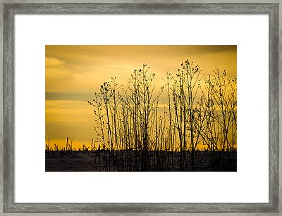 A Winter's Silhouette Framed Print by Christi Kraft