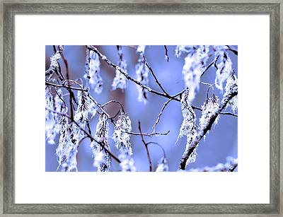 A Withered Branch Framed Print by Toppart Sweden