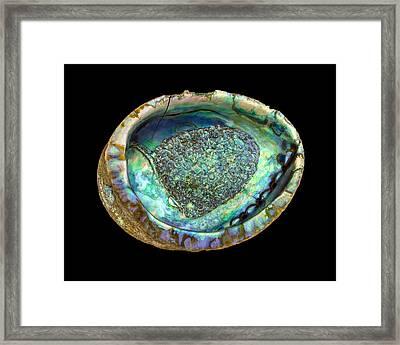 Abalone Seashell Framed Print by Jim Hughes