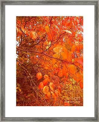 Ablaze Framed Print by Elizabeth Carr