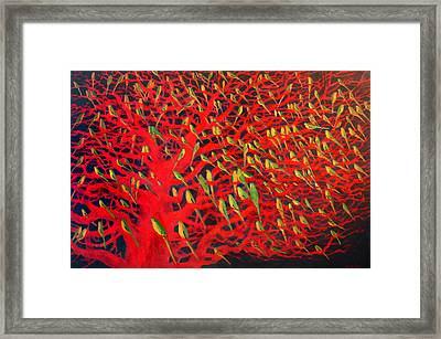 About 180 Orange Bellied Parrots  Framed Print by Charlie Baird