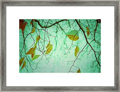 Above Framed Print by Joy StClaire