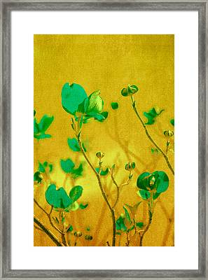 Abstract Dogwood Framed Print by Bonnie Bruno