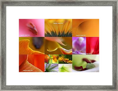 Abstract Fine Art Flower Photography Framed Print by Juergen Roth