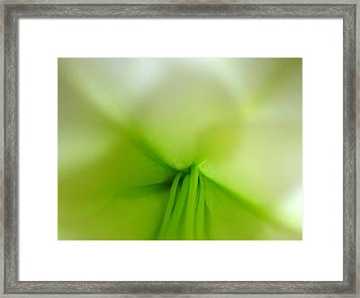 Abstract Forms In Nature Framed Print by Juergen Roth