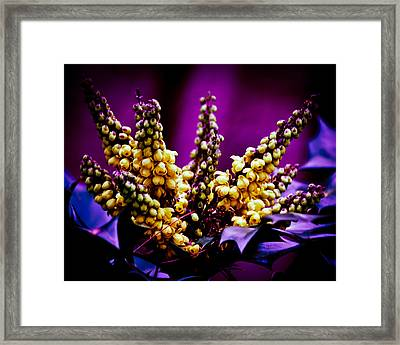 Abstract Holly Framed Print by Mary Zeman