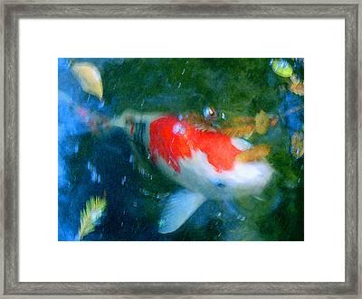 Abstract Koi 3 Framed Print by Amy Vangsgard