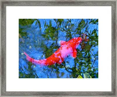 Abstract Koi 4 Framed Print by Amy Vangsgard
