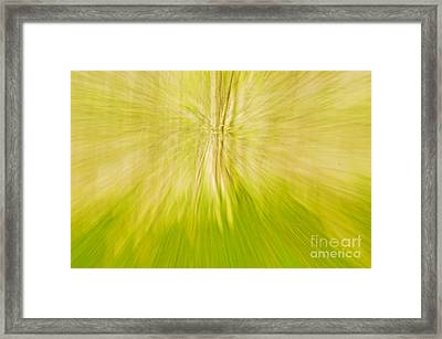 Abstract Nature  Framed Print by Gry Thunes