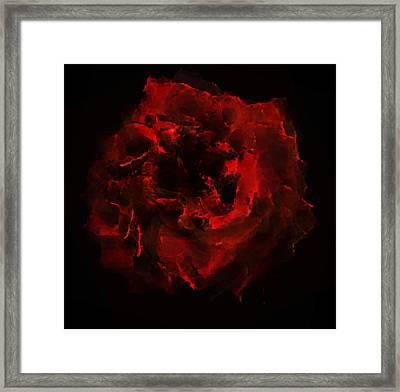 Abstract Red Rose Framed Print by Georgeta Blanaru