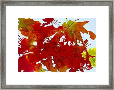 Abstract - Riot Of Fall Color - Autumn Framed Print by Ellen Levinson