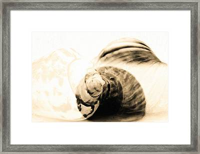 Abstract Sea Shells In Oil Paint  Framed Print by Toppart Sweden