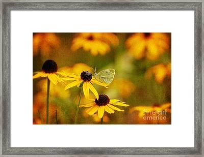 Abundance Framed Print by Lois Bryan