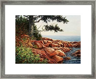 Acadia Tree Framed Print by Elaine Farmer