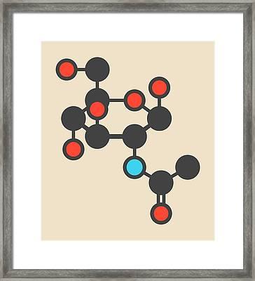 Acetylglucosamine Molecule Framed Print by Molekuul