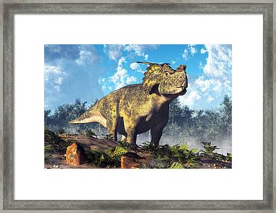 Achelousaurus Framed Print by Daniel Eskridge