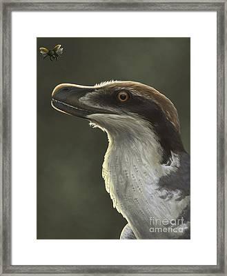 Acheroraptor Dromaeosaurid Dinosaur Framed Print by Emily Willoughby