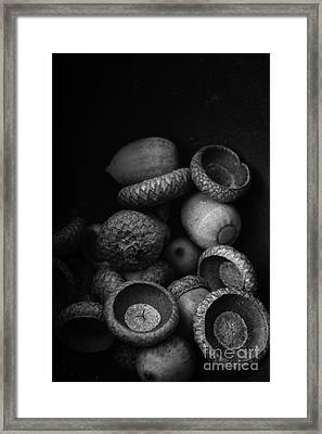 Acorns Black And White Framed Print by Edward Fielding