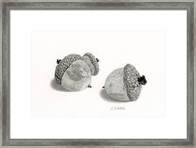 Acorns- Black And White Framed Print by Sarah Batalka