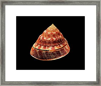 Adanson's Slit Shell Sea Snail Shell Framed Print by Gilles Mermet