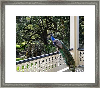 Admiring The View Framed Print by Cindy Nearing