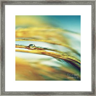 Adopt The Pace Of Nature- Feather Photograph Framed Print by Sylvia Cook