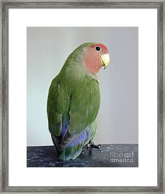 Adorable Pickle Framed Print by Terri Waters
