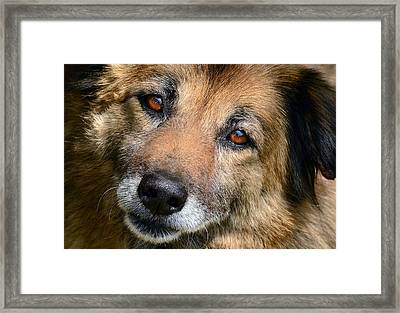 Adore Framed Print by Camille Lopez