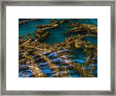 Adrift Framed Print by Lesley Brindley