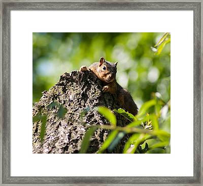 Advantage Point Framed Print by Optical Playground By MP Ray
