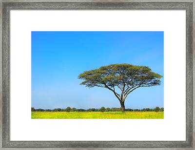 Africa Framed Print by Sebastian Musial