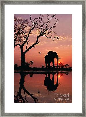 African Elephant At Dawn Framed Print by Frans Lanting MINT Images
