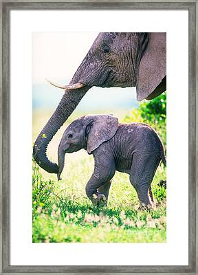 African Elephant Mother And Young Framed Print by Art Wolfe