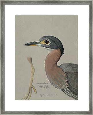 African Night Heron  Framed Print by Louis Agassiz Fuertes
