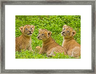 African Princesses Framed Print by Ashley Vincent