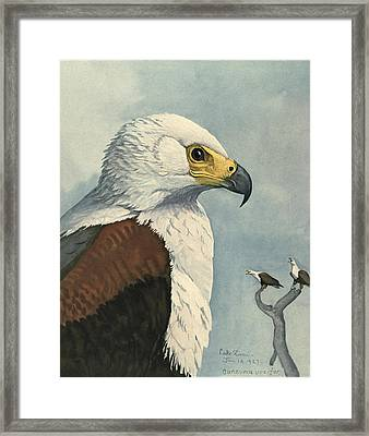 African Sea Eagle  Framed Print by Louis Agassiz Fuertes