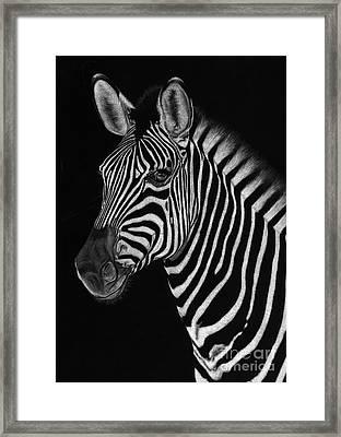 African Stallion Framed Print by Sheryl Unwin