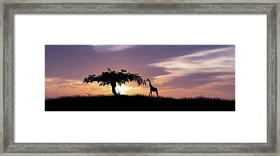 African Sunset Framed Print by Aged Pixel