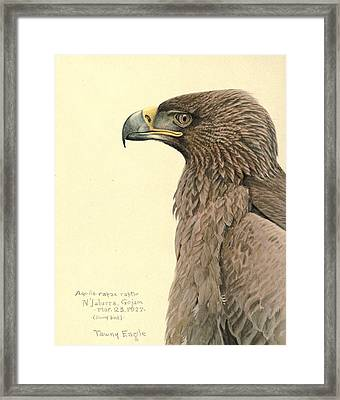 African Tawny Eagle Framed Print by Louis Agassiz Fuertes