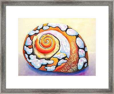 African Turbo Shell Framed Print by Carlin Blahnik